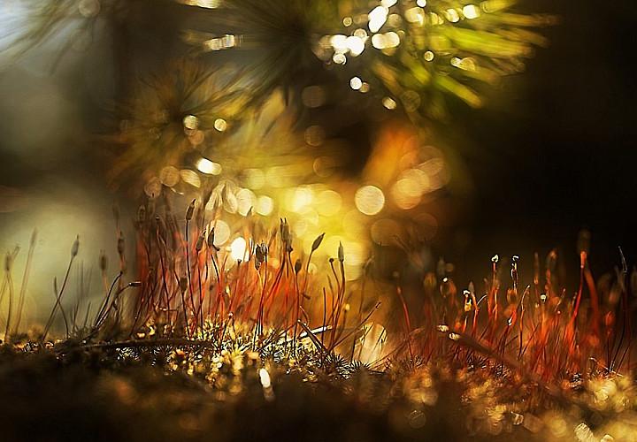 Выставка «Уходит лето в капельках росы...»