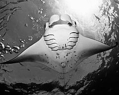 Выставка «Уровень моря» известного подводного фотографа Андрея Городисского