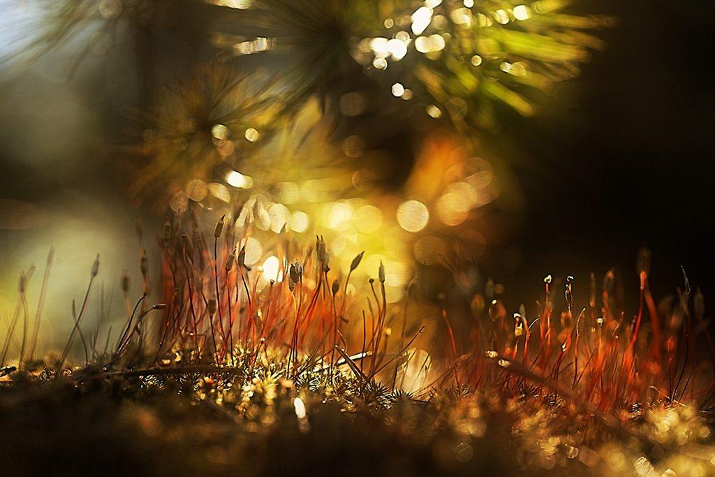 Волшебный лес © Галина Юняева