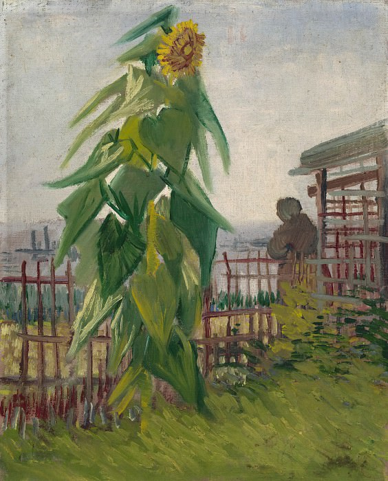 The Garden with Sunflower, Vincent van Gogh